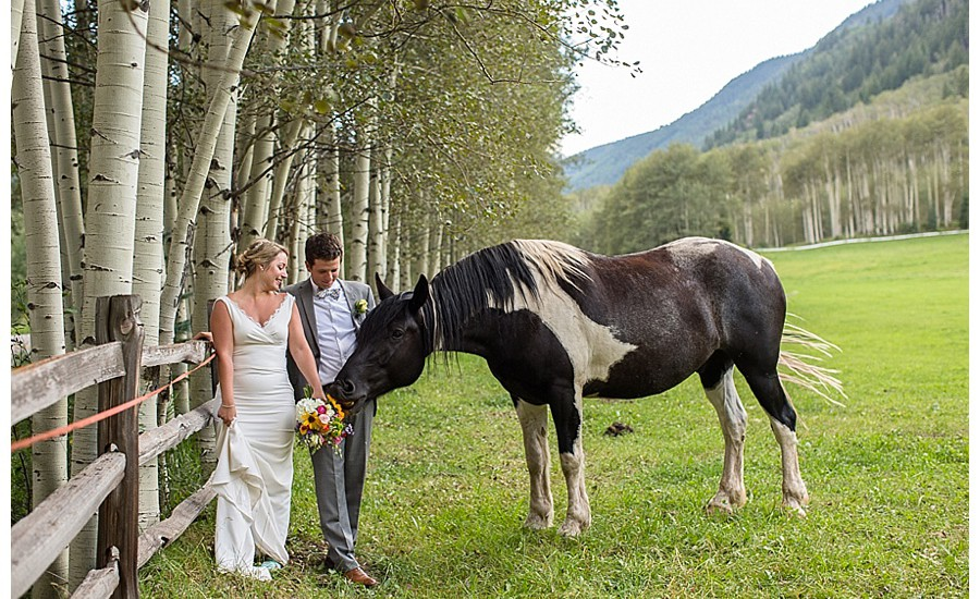 Horse Crashes Wedding Photo Shoot